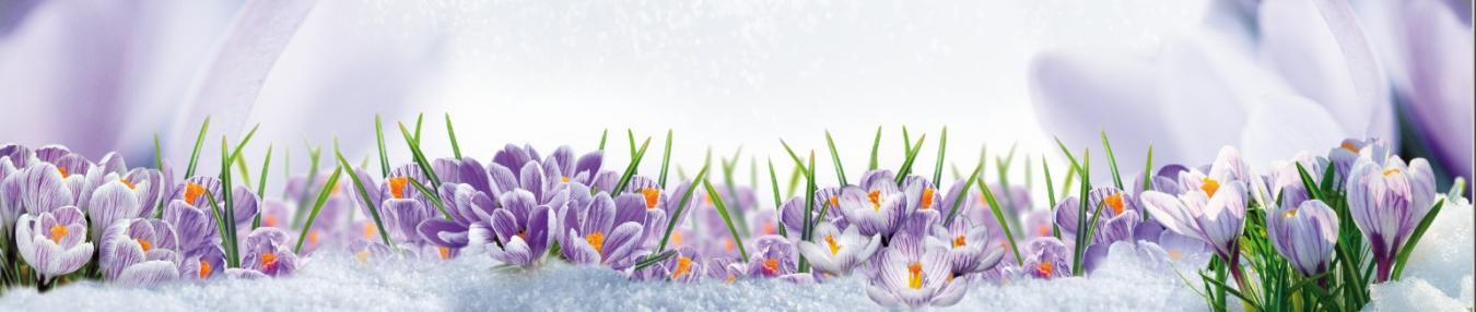 менее весна картинки для шапки сайта оранжевым контуром более